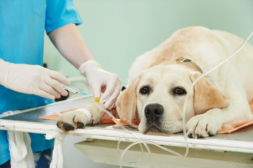 wellness exams for your pets