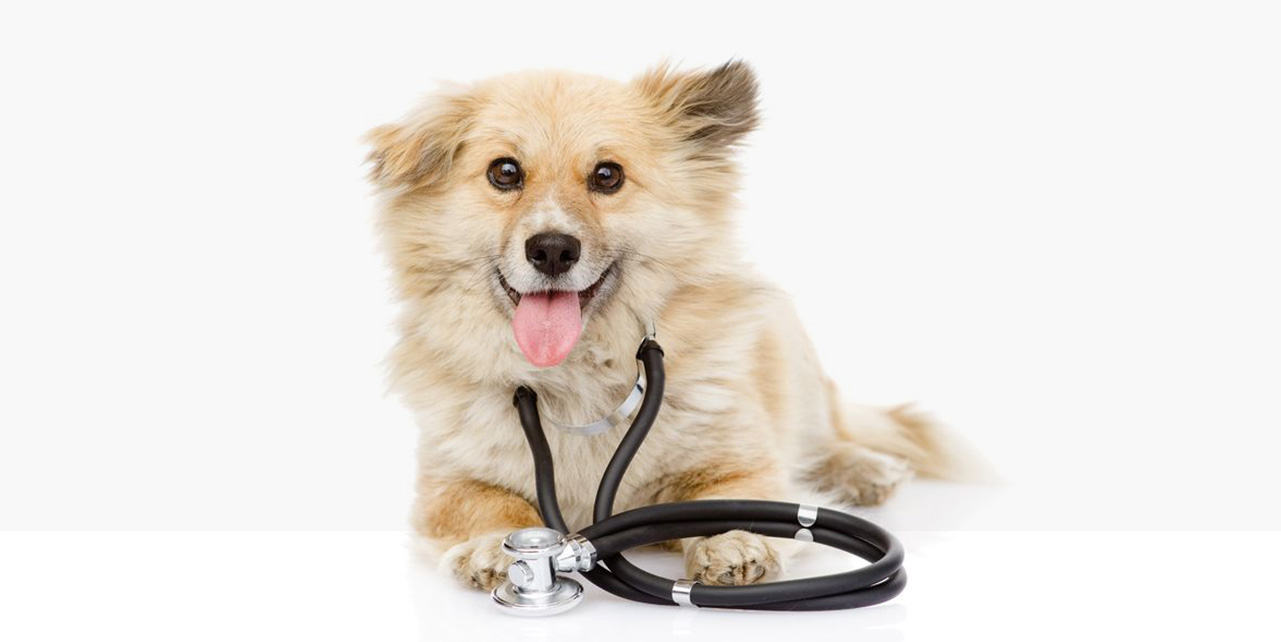 Oaklands Veterinary Hospital: the kind of care your pets deserve.